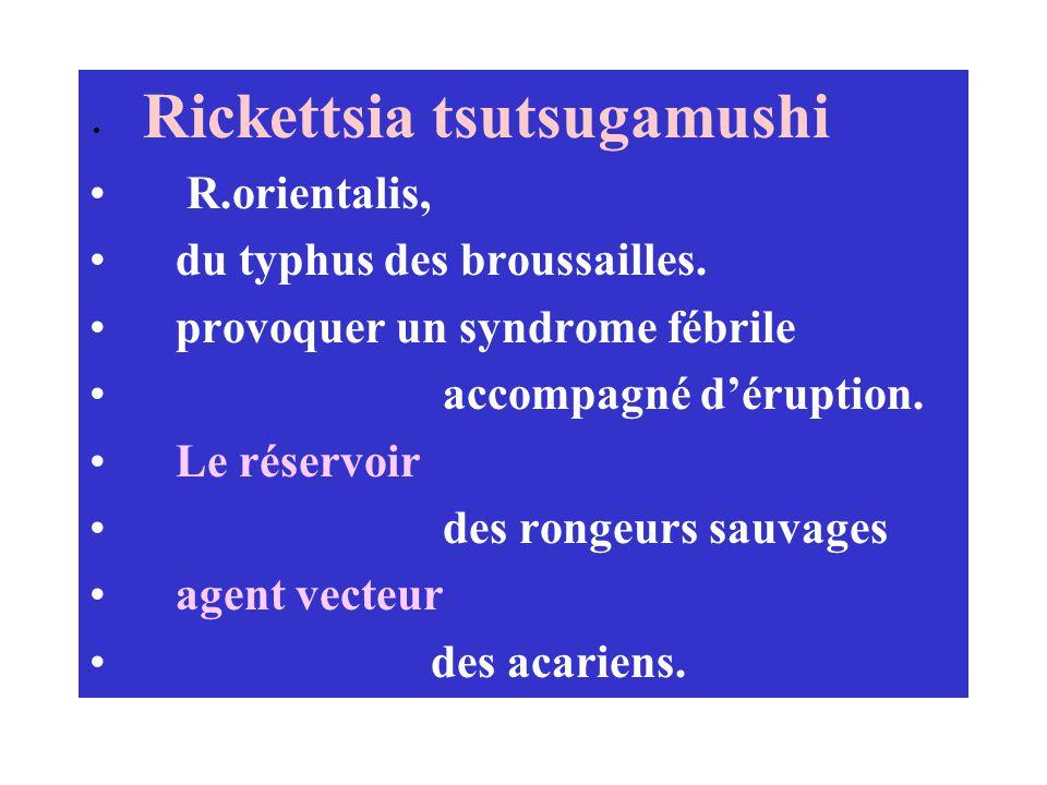 Rickettsia tsutsugamushi R.orientalis, du typhus des broussailles. provoquer un syndrome fébrile accompagné déruption. Le réservoir des rongeurs sauva