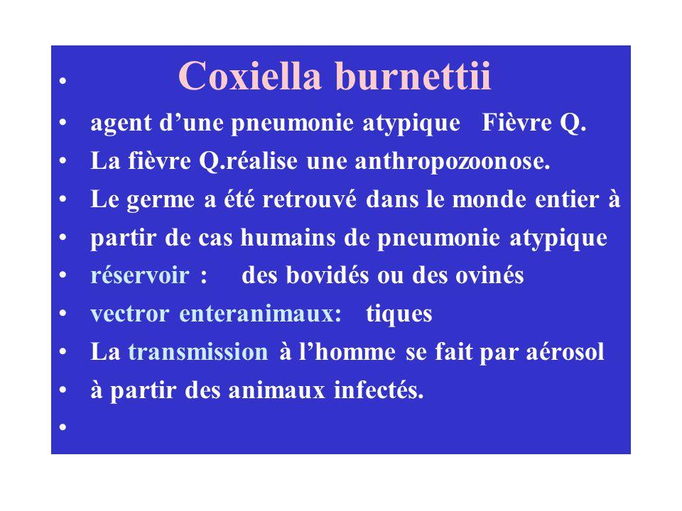 Coxiella burnettii agent dune pneumonie atypique Fièvre Q. La fièvre Q.réalise une anthropozoonose. Le germe a été retrouvé dans le monde entier à par