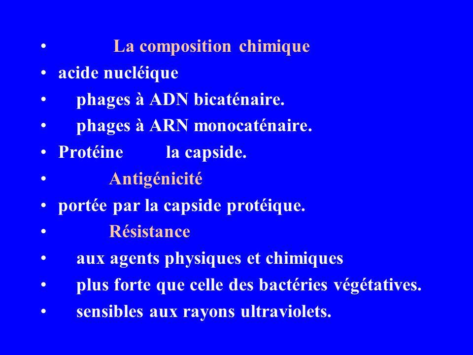 La composition chimique acide nucléique phages à ADN bicaténaire. phages à ARN monocaténaire. Protéine la capside. Antigénicité portée par la capside