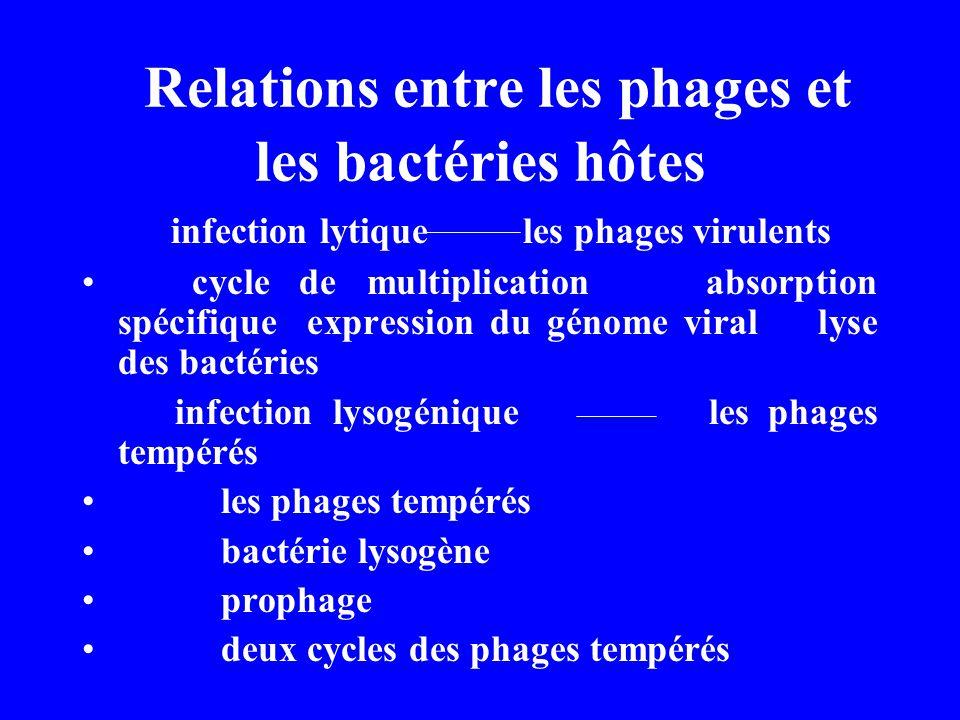 Relations entre les phages et les bactéries hôtes infection lytique les phages virulents cycle de multiplication absorption spécifique expression du g
