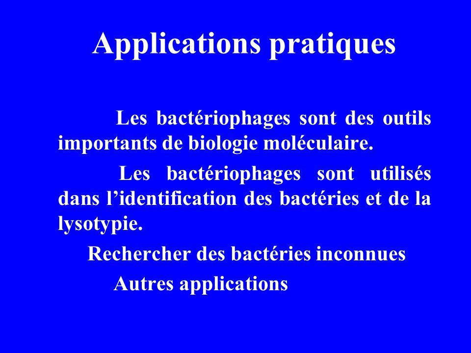 Applications pratiques Les bactériophages sont des outils importants de biologie moléculaire. Les bactériophages sont utilisés dans lidentification de