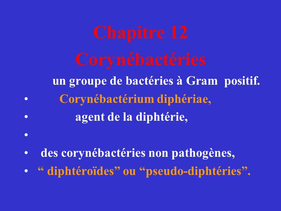 Chapitre 12 Corynébactéries un groupe de bactéries à Gram positif. Corynébactérium diphériae, agent de la diphtérie, des corynébactéries non pathogène