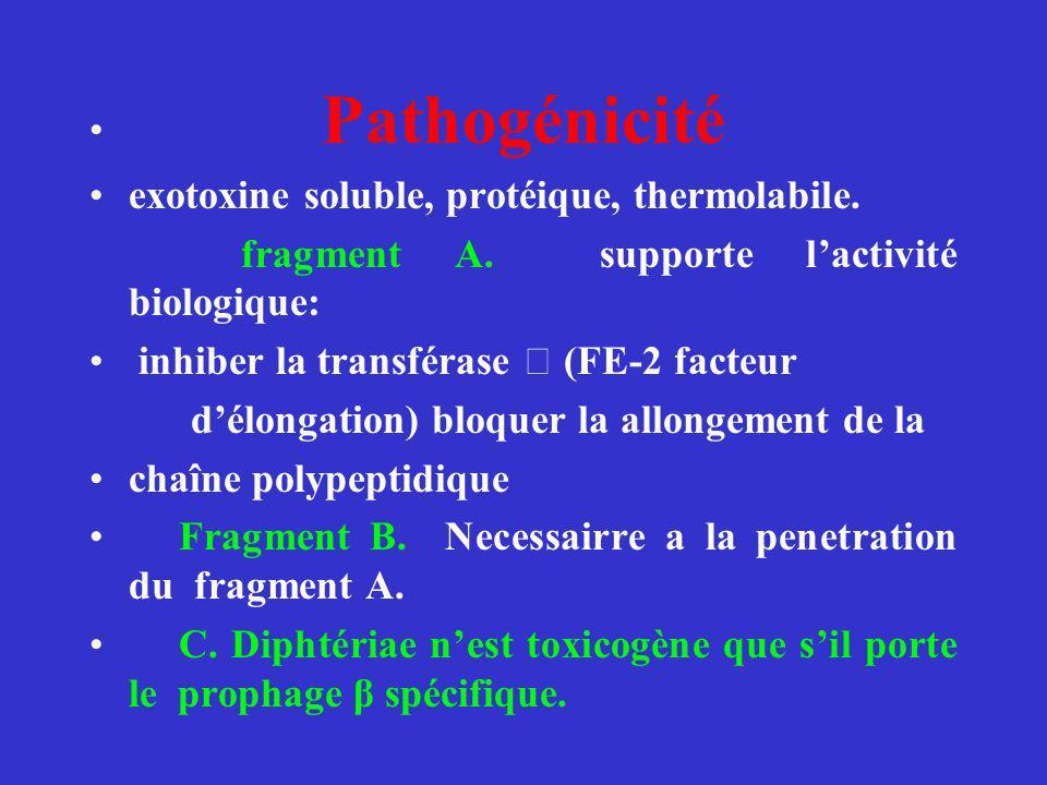 Pathogénicité exotoxine soluble, protéique, thermolabile. fragment A. supporte lactivité biologique: inhiber la transférase (FE-2 facteur délongation)