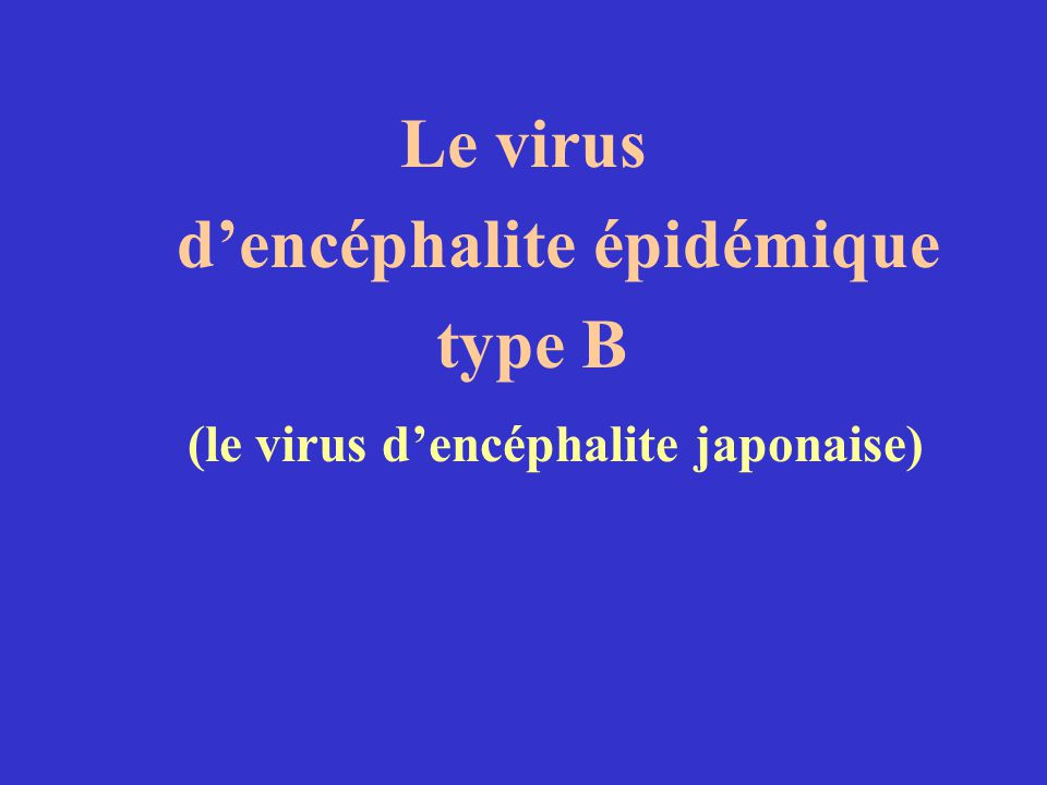 Le virus dencéphalite épidémique type B (le virus dencéphalite japonaise)