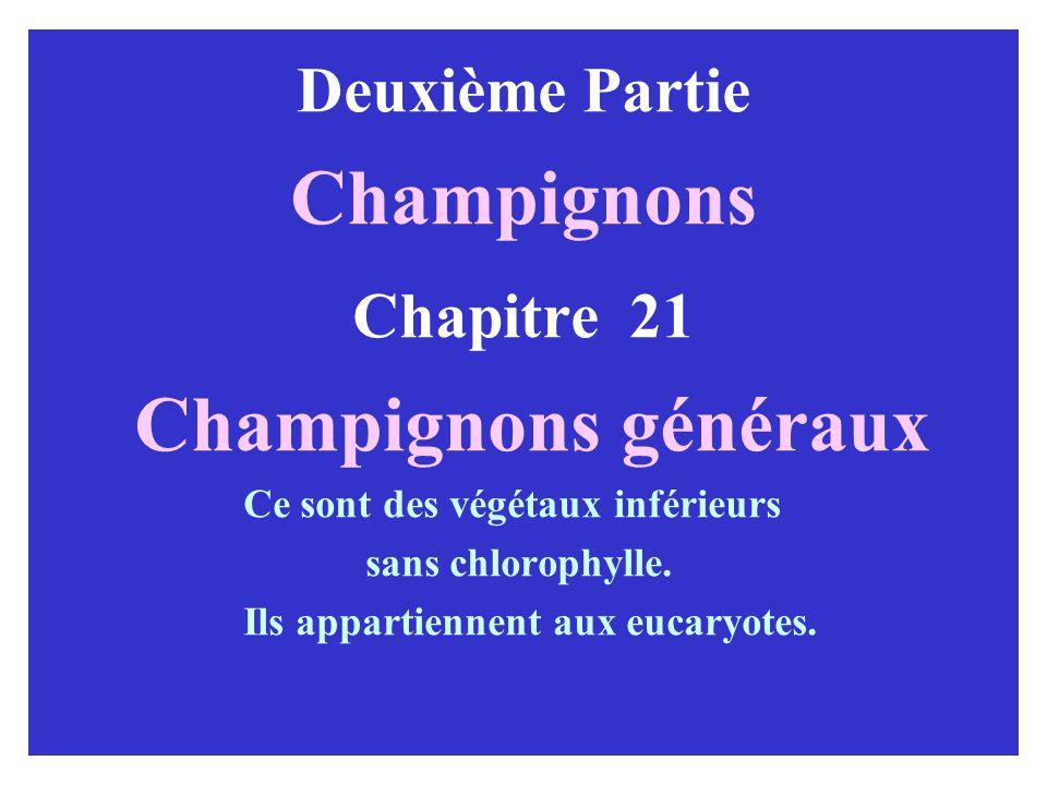 Deuxième Partie Champignons Chapitre 21 Champignons généraux Ce sont des végétaux inférieurs sans chlorophylle.