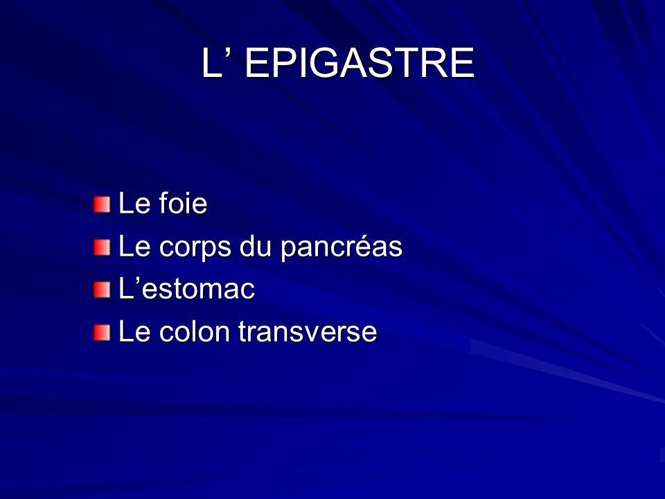 L EPIGASTRE L EPIGASTRE Le foie Le corps du pancréas Lestomac Le colon transverse