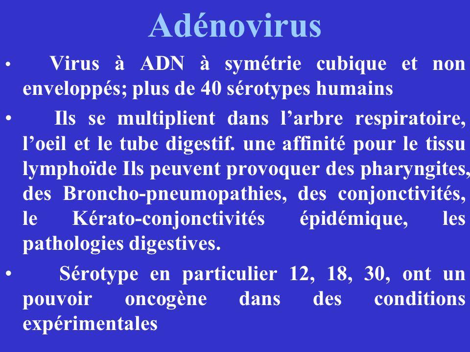 Adénovirus Virus à ADN à symétrie cubique et non enveloppés; plus de 40 sérotypes humains Ils se multiplient dans larbre respiratoire, loeil et le tub