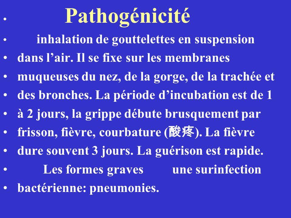 Pathogénicité inhalation de gouttelettes en suspension dans lair. Il se fixe sur les membranes muqueuses du nez, de la gorge, de la trachée et des bro