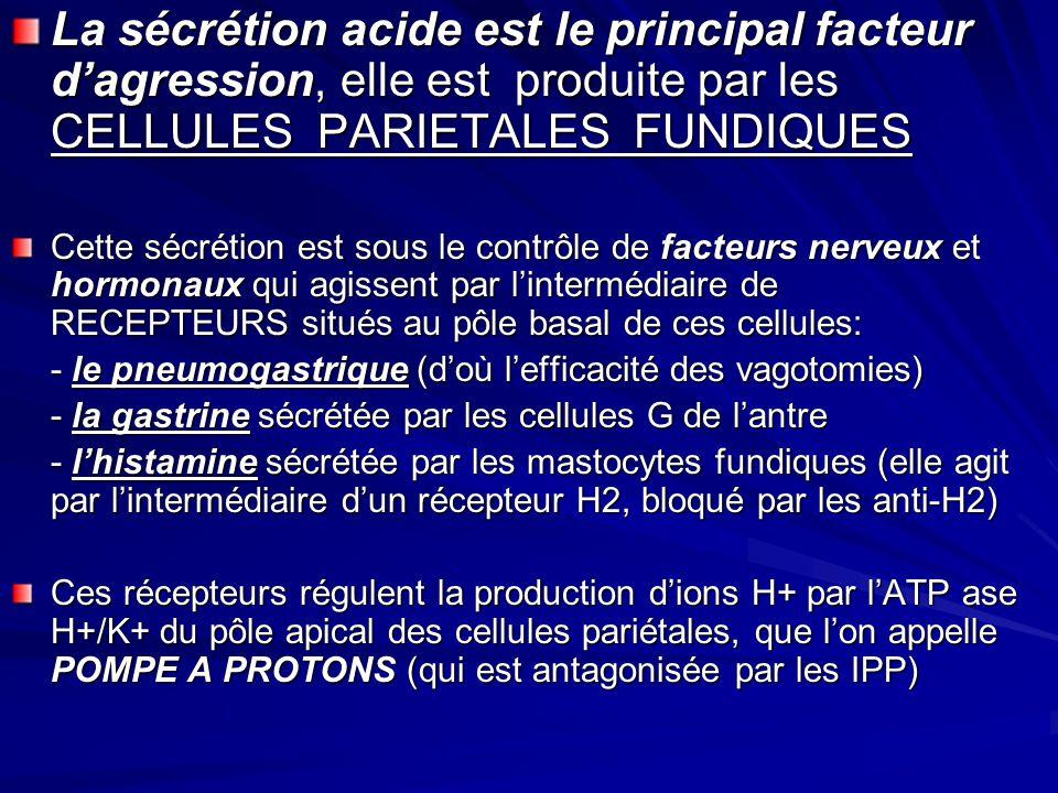 La sécrétion acide est le principal facteur dagression, elle est produite par les CELLULES PARIETALES FUNDIQUES Cette sécrétion est sous le contrôle d