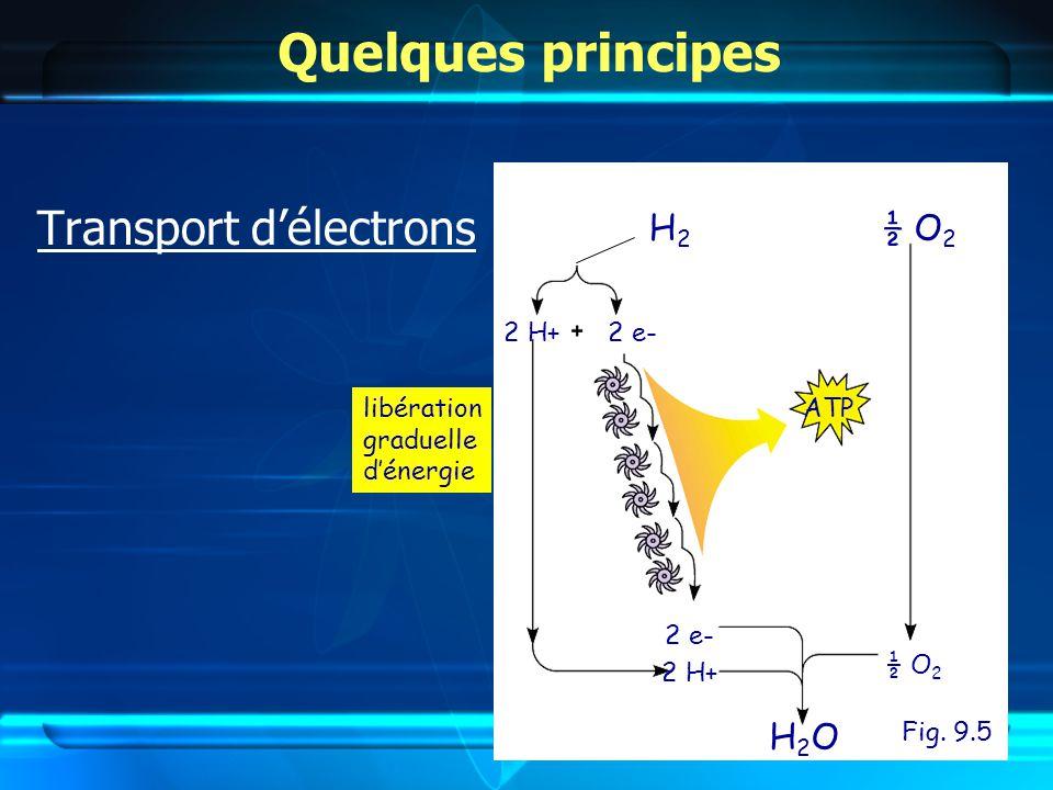 Quelques principes Transport délectrons explosion énergie libération graduelle dénergie KaBoOM !.