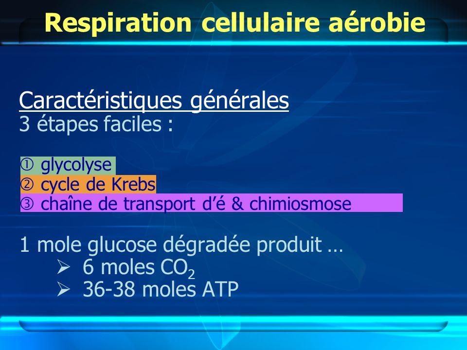 Respiration cellulaire aérobie Caractéristiques générales 3 étapes faciles : glycolyse cycle de Krebs chaîne de transport dé & chimiosmose 1 mole glucose dégradée produit … 6 moles CO 2 36-38 moles ATP