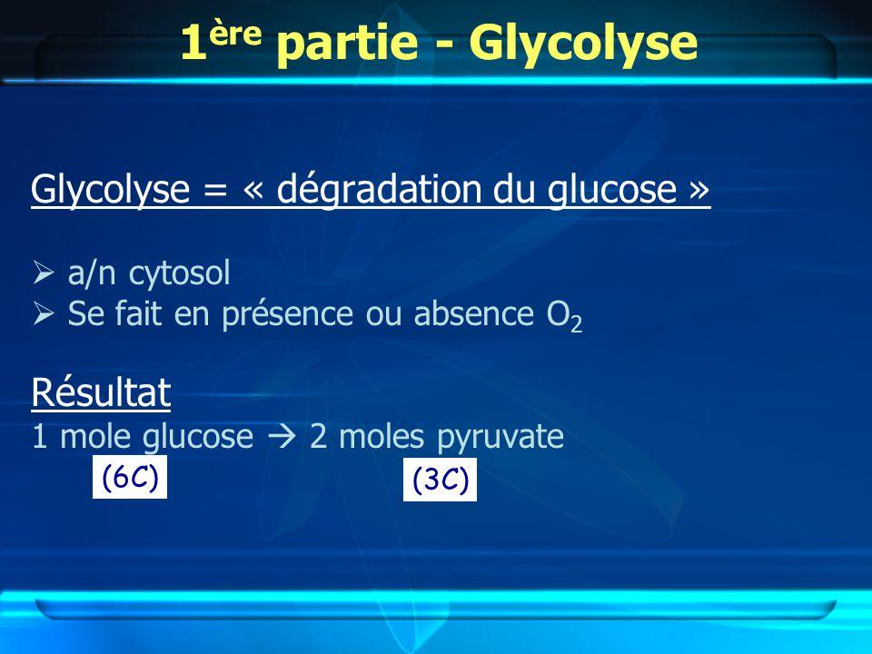 1 ère partie - Glycolyse Glycolyse = « dégradation du glucose » a/n cytosol Se fait en présence ou absence O 2 Résultat 1 mole glucose 2 moles pyruvate (6C) (3C)