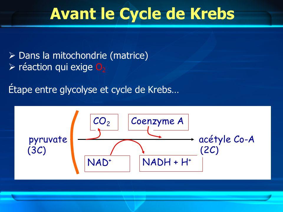 Avant le Cycle de Krebs Dans la mitochondrie (matrice) réaction qui exige O 2 Étape entre glycolyse et cycle de Krebs… (3C) pyruvate CO 2 NAD + NADH + H + Coenzyme A (2C) acétyle Co-A
