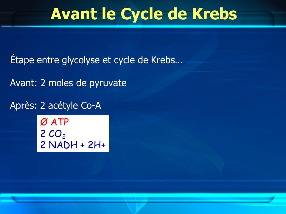 Avant le Cycle de Krebs Étape entre glycolyse et cycle de Krebs… Avant: 2 moles de pyruvate Après: 2 acétyle Co-A Ø ATP 2 CO 2 2 NADH + 2H+