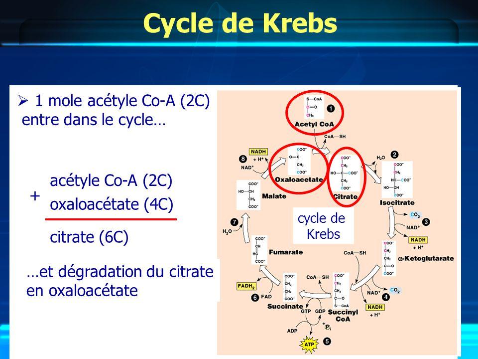 Cycle de Krebs cycle de Krebs acétyle Co-A (2C) oxaloacétate (4C) citrate (6C) + …et dégradation du citrate en oxaloacétate 1 mole acétyle Co-A (2C) entre dans le cycle…