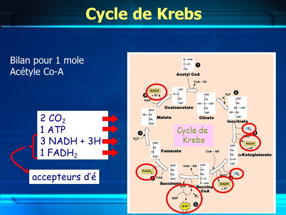 Cycle de Krebs Bilan pour 1 mole Acétyle Co-A Cycle de Krebs 2 CO 2 1 ATP 3 NADH + 3H+ 1 FADH 2 accepteurs dé