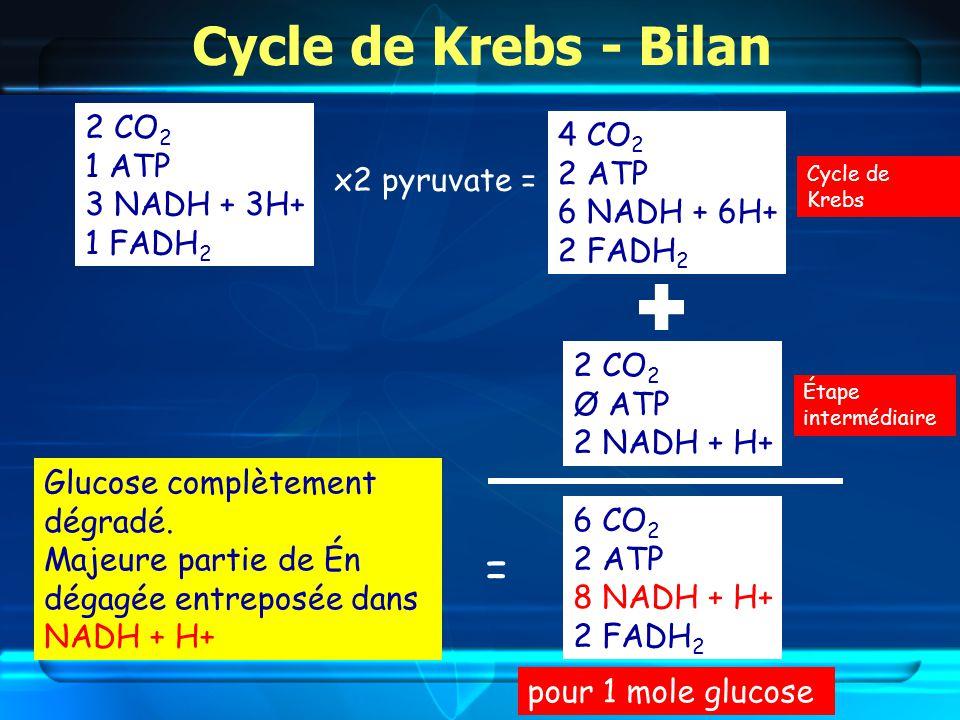 Cycle de Krebs - Bilan 6 CO 2 2 ATP 8 NADH + H+ 2 FADH 2 Glucose complètement dégradé.