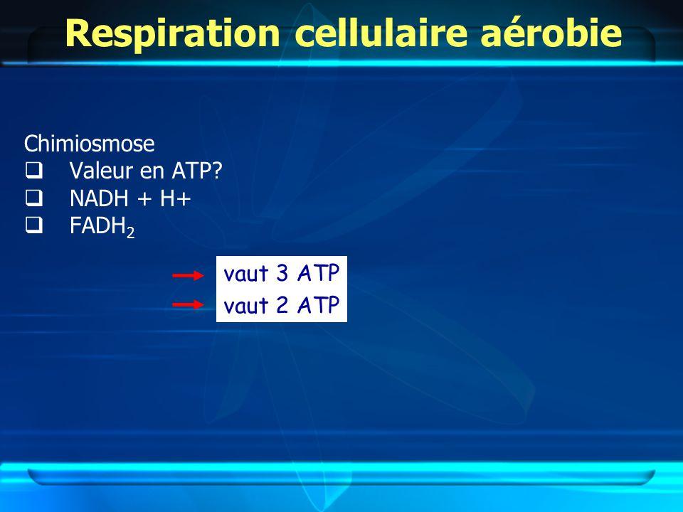 Respiration cellulaire aérobie Chimiosmose Valeur en ATP? NADH + H+ FADH 2 vaut 3 ATP vaut 2 ATP