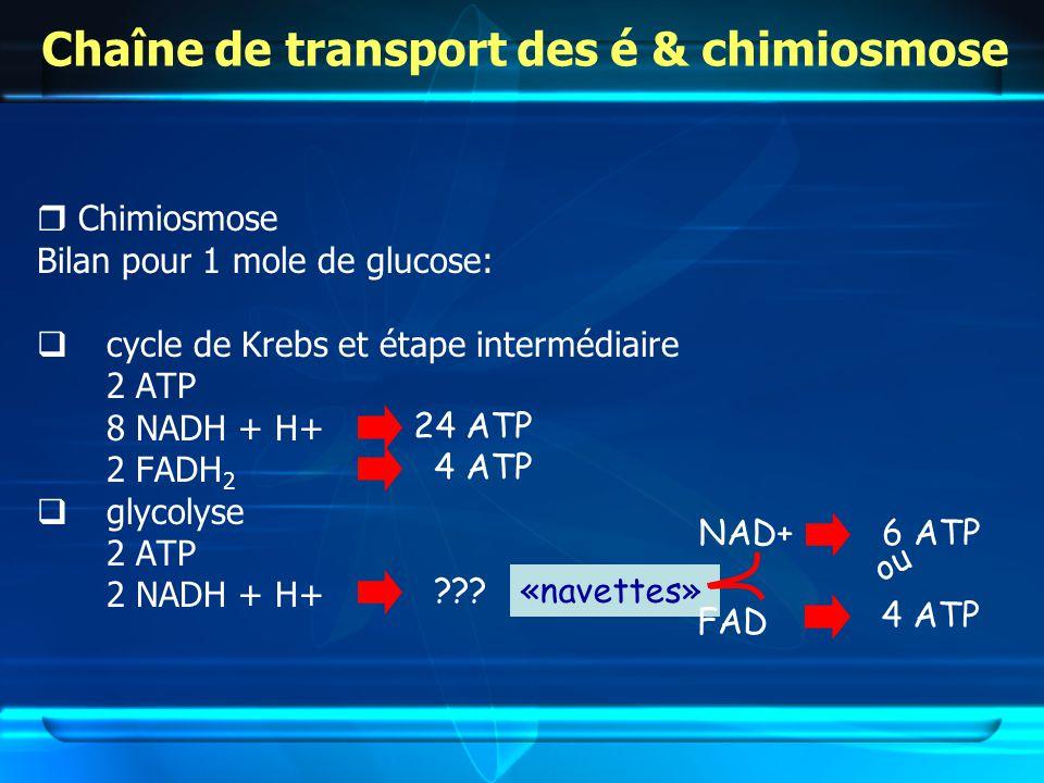 Chaîne de transport des é & chimiosmose Chimiosmose Bilan pour 1 mole de glucose: cycle de Krebs et étape intermédiaire 2 ATP 8 NADH + H+ 2 FADH 2 glycolyse 2 ATP 2 NADH + H+ 24 ATP 4 ATP ???«navettes» NAD+ FAD 4 ATP 6 ATP ou