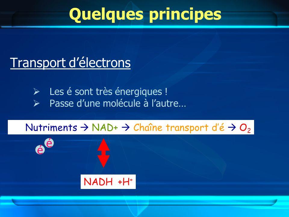 Quelques principes Transport délectrons Les é sont très énergiques .
