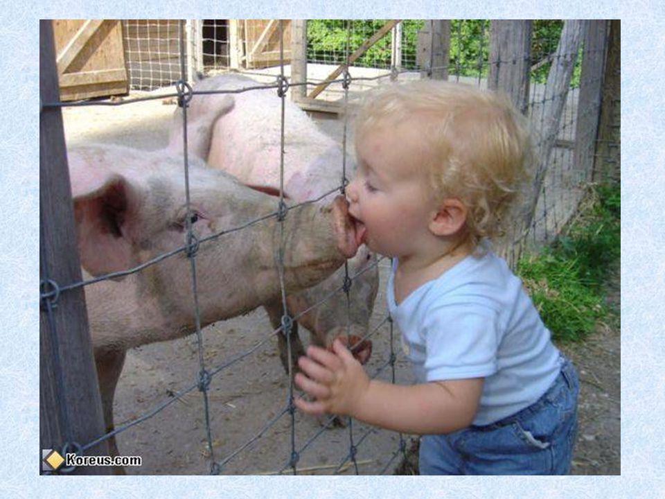 Voici un bisou cochon: Voir photo page suivante