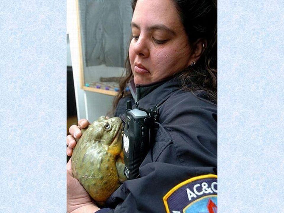 La police protège aussi les animaux sauvages : Voir photo page suivante