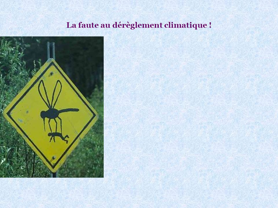 Cette année, il y aura beaucoup de moustiques : Voir photo page suivante