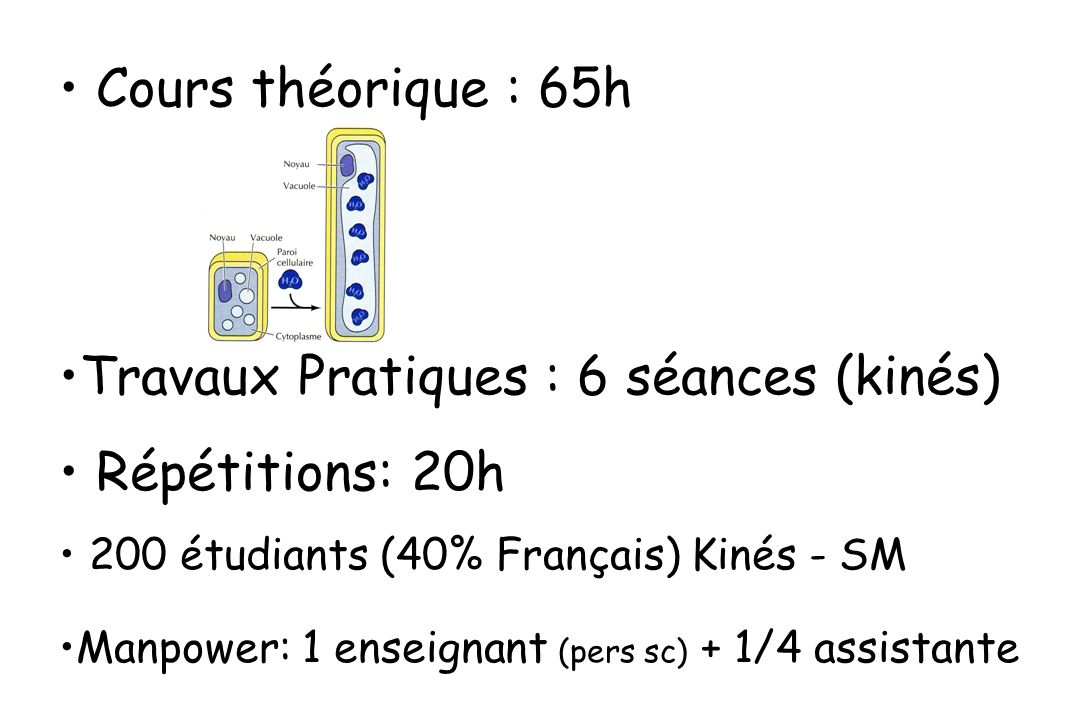 Cours théorique : 65h Travaux Pratiques : 6 séances (kinés) Répétitions: 20h 200 étudiants (40% Français) Kinés - SM Manpower: 1 enseignant (pers sc) + 1/4 assistante