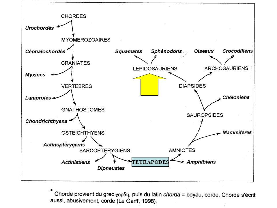 TETRAPODES