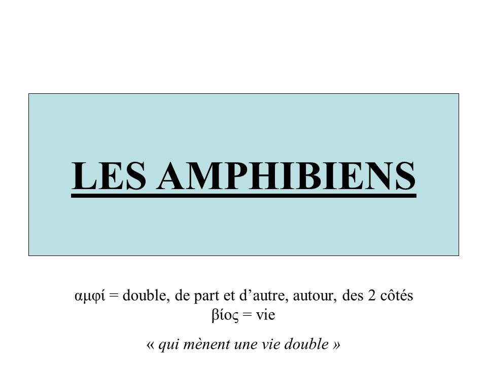 LES AMPHIBIENS αμφί = double, de part et dautre, autour, des 2 côtés βίος = vie « qui mènent une vie double »