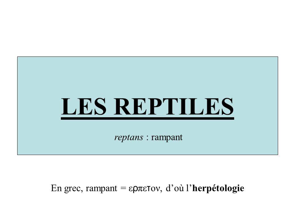 LES REPTILES reptans : rampant En grec, rampant = ε ρ πε τ ον, doù lherpétologie