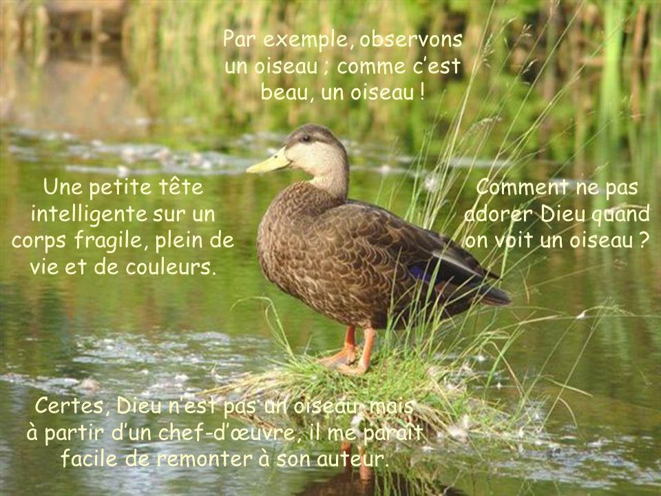 Assis, dans la forêt près dun ruisseau, sentons Dieu, écoutons Dieu qui détaille sa beauté dans le moindre des animaux.