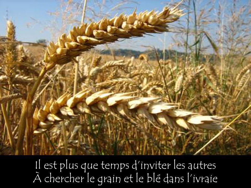 Il est plus que temps dinviter les autres À chercher le grain et le blé dans livraie