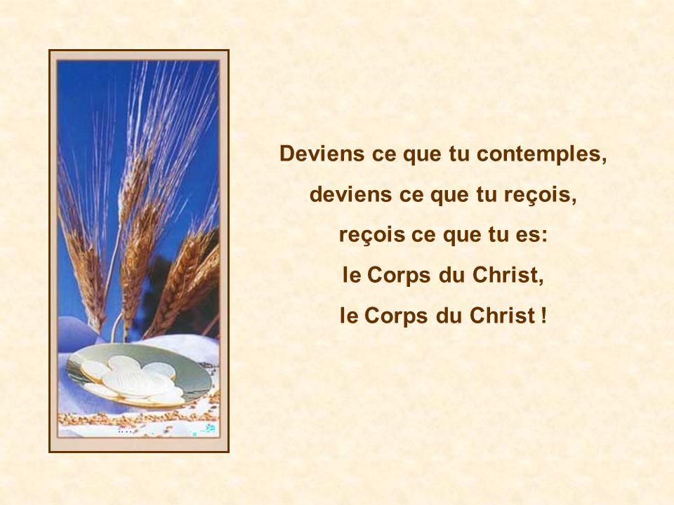 Deviens ce que tu contemples, deviens ce que tu reçois, reçois ce que tu es: le Corps du Christ, le Corps du Christ !