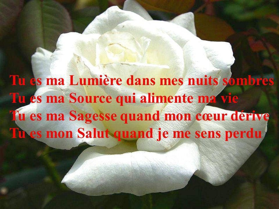 Tu es ma Lumière dans mes nuits sombres Tu es ma Source qui alimente ma vie Tu es ma Sagesse quand mon cœur dérive Tu es mon Salut quand je me sens perdu