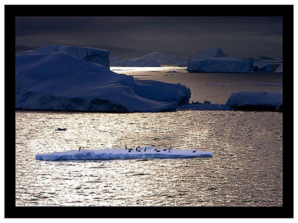 Environ 99% de l Antarctique est couvert de glace sur une épaisseur moyenne de 2 500 mètres, atteignant même à quelques endroits 4 776 mètres.