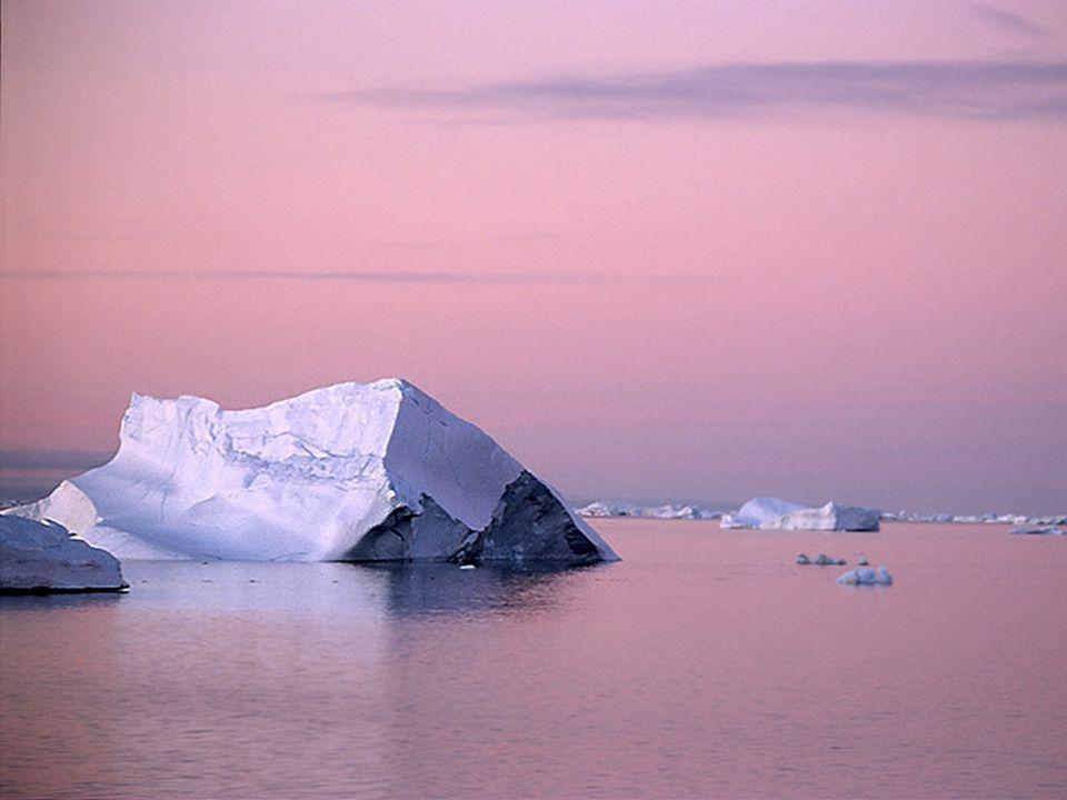 Malgré la dureté du climat, l Antarctique a une faune riche et étonnamment bien adaptée aux conditions très dures.