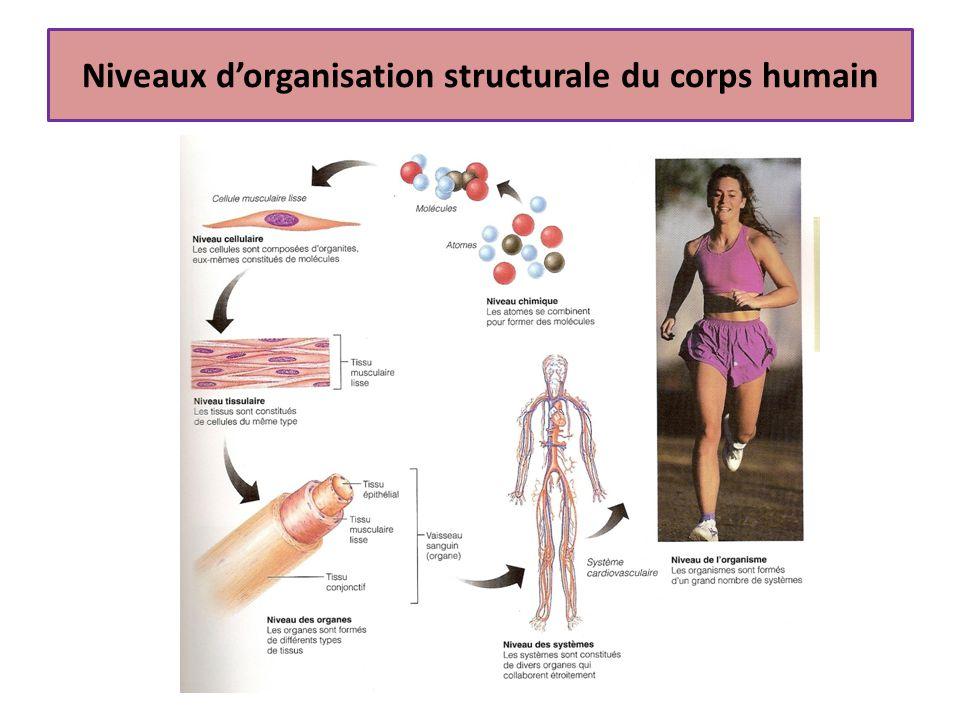 Cellules Unité structurale et fonctionnelle des tissus Durée de vie des cellules Fonctionnement de la cellule Oxygène Nutriments