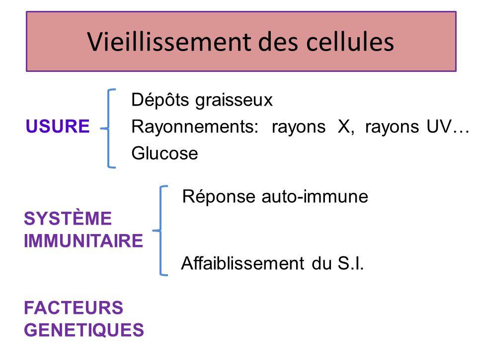 Dépôts graisseux USURE Rayonnements: rayons X, rayons UV… Glucose Vieillissement des cellules FACTEURS GENETIQUES Réponse auto-immune SYSTÈME IMMUNITA