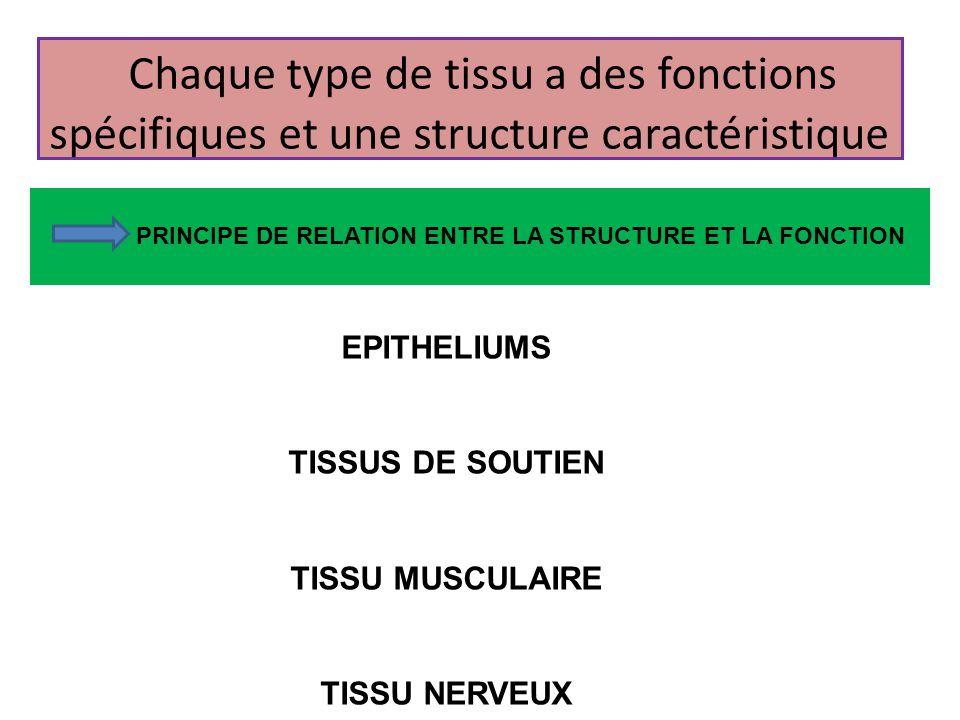 Chaque type de tissu a des fonctions spécifiques et une structure caractéristique EPITHELIUMS TISSUS DE SOUTIEN TISSU MUSCULAIRE TISSU NERVEUX PRINCIP