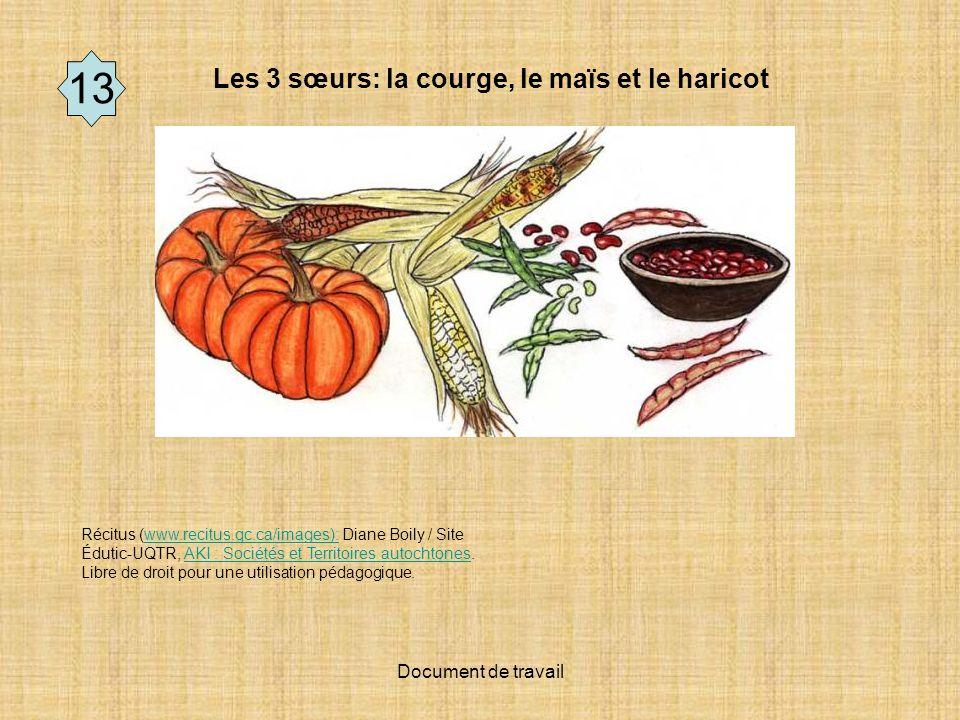 Document de travail 10 Les 3 sœurs: la courge, le maïs et le haricot Récitus (www.recitus.qc.ca/images): Diane Boily / Site Édutic-UQTR, AKI : Sociétés et Territoires autochtones.