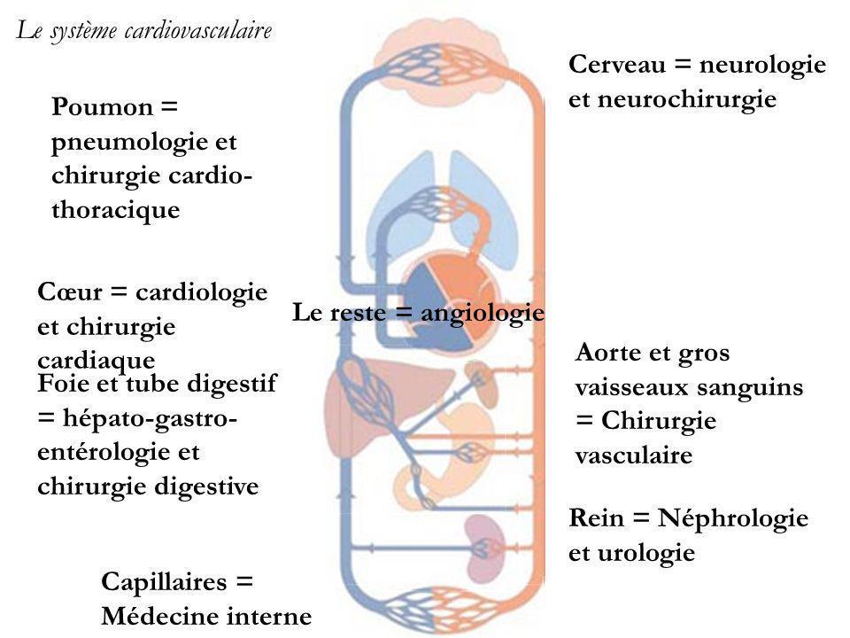 Cœur = cardiologie et chirurgie cardiaque Le système cardiovasculaire Cerveau = neurologie et neurochirurgie Foie et tube digestif = hépato-gastro- entérologie et chirurgie digestive Poumon = pneumologie et chirurgie cardio- thoracique Rein = Néphrologie et urologie Aorte et gros vaisseaux sanguins = Chirurgie vasculaire Capillaires = Médecine interne Le reste = angiologie