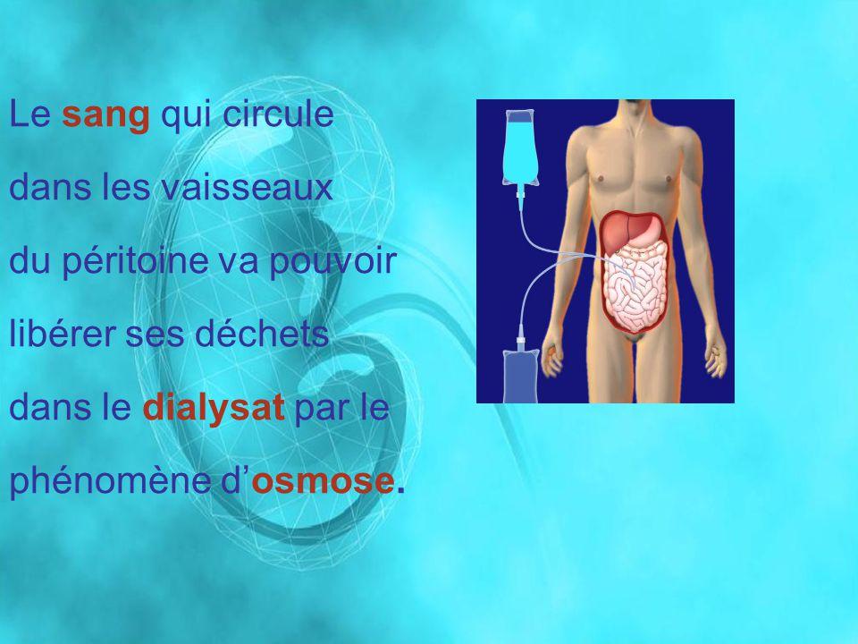 Le sang qui circule dans les vaisseaux du péritoine va pouvoir libérer ses déchets dans le dialysat par le phénomène dosmose.