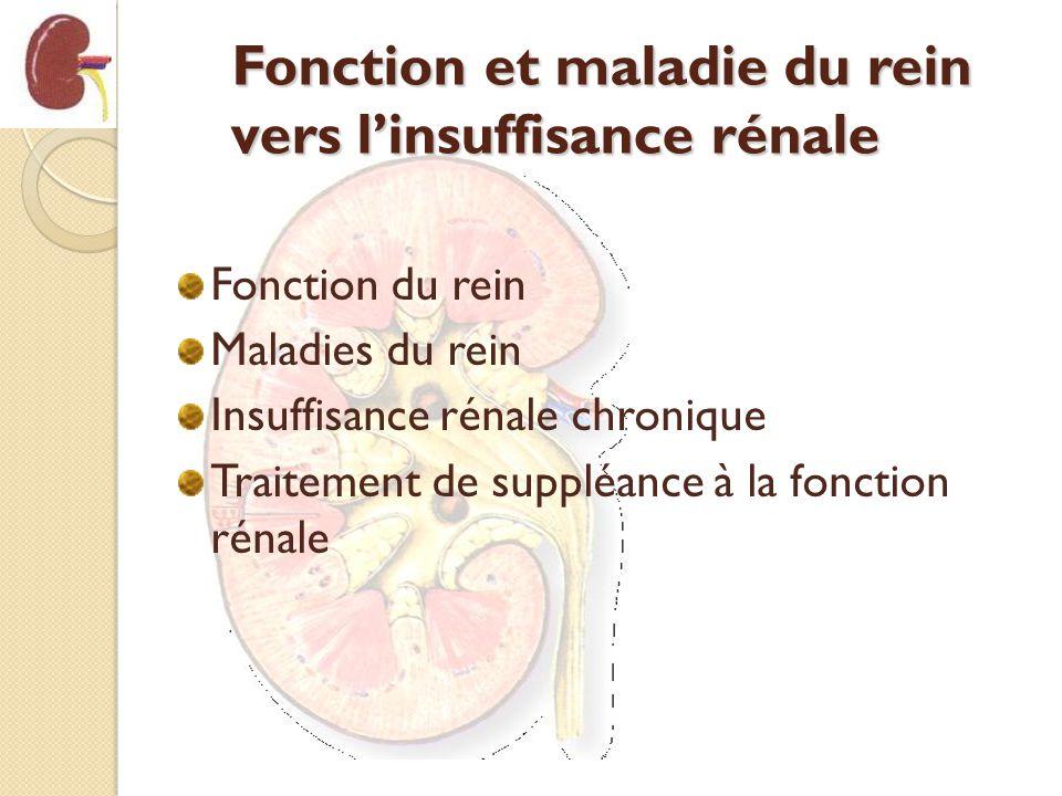 Fonction et maladie du rein vers linsuffisance rénale Fonction du rein Maladies du rein Insuffisance rénale chronique Traitement de suppléance à la fo