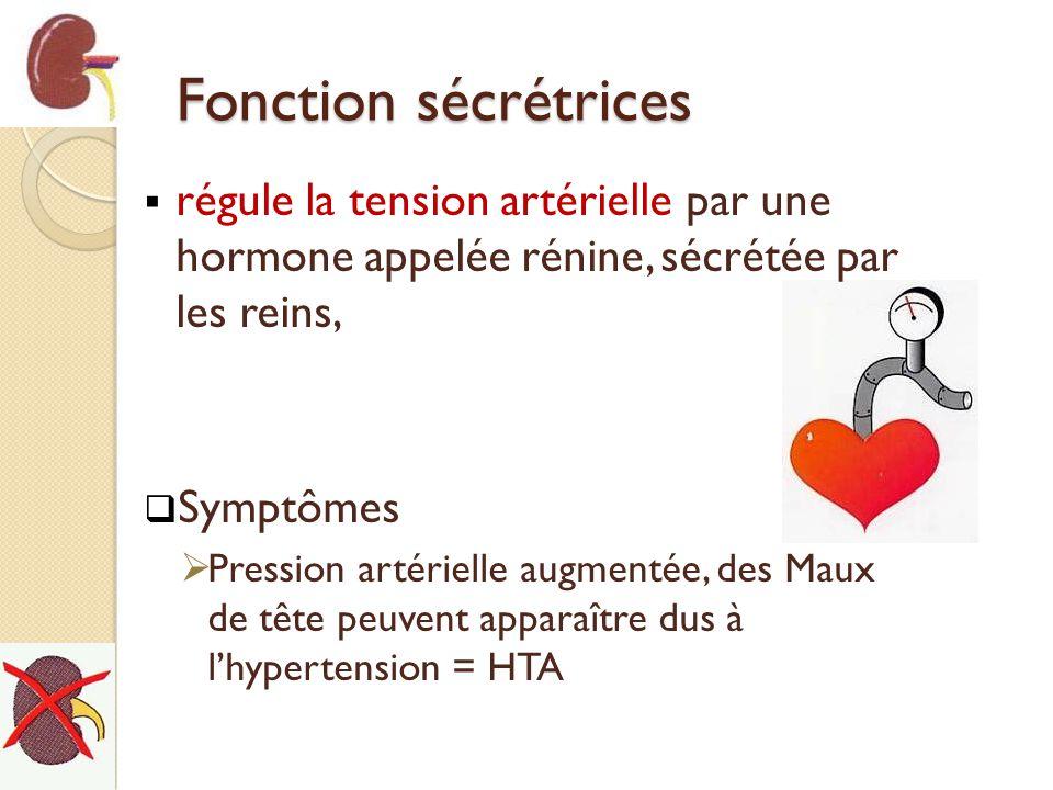 Fonction sécrétrices régule la tension artérielle par une hormone appelée rénine, sécrétée par les reins, Symptômes Pression artérielle augmentée, des