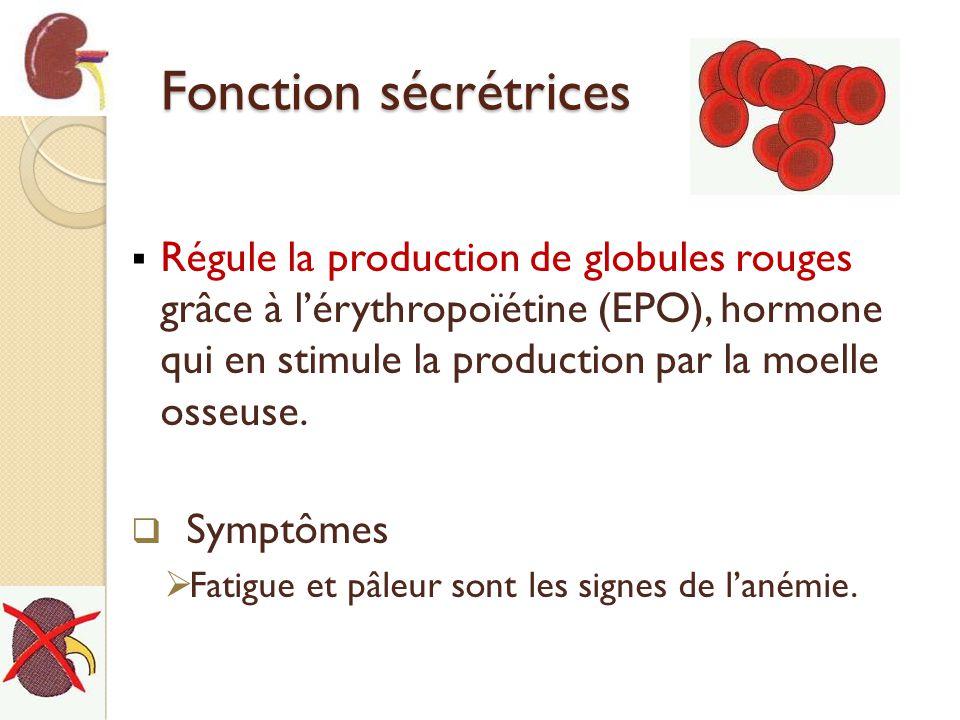 Fonction sécrétrices Régule la production de globules rouges grâce à lérythropoïétine (EPO), hormone qui en stimule la production par la moelle osseus
