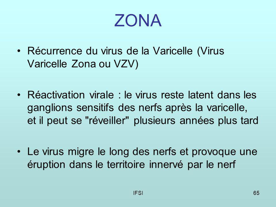 IFSI65 ZONA Récurrence du virus de la Varicelle (Virus Varicelle Zona ou VZV) Réactivation virale : le virus reste latent dans les ganglions sensitifs des nerfs après la varicelle, et il peut se réveiller plusieurs années plus tard Le virus migre le long des nerfs et provoque une éruption dans le territoire innervé par le nerf