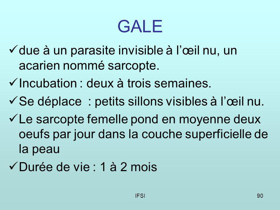 IFSI90 GALE due à un parasite invisible à lœil nu, un acarien nommé sarcopte.