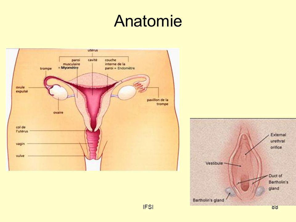 IFSI88 Anatomie
