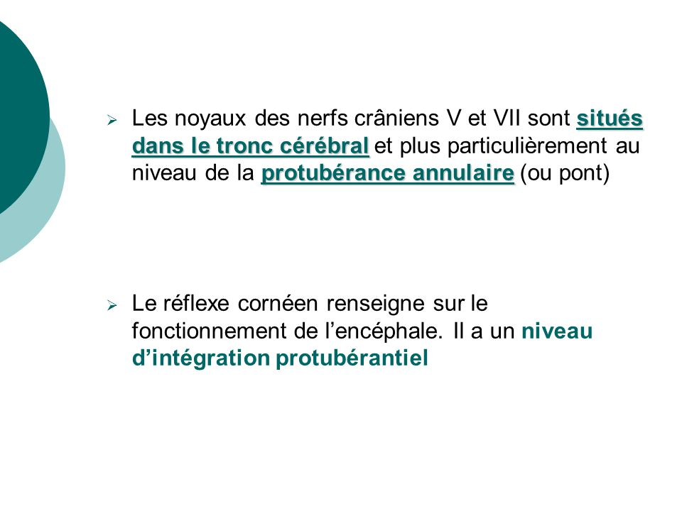 Protubérance Protubérance annulaire annulaire (réflexe cornéen) (réflexe cornéen) Bulbe rachidien (réflexe de toux) EMERGENCE DES NERFS CRÂNIENS Nerf crânien II (nerf optique) Nerf crânien III (nerf oculo-moteur)Mésencéphale(réflexephotomoteur) Nerf crânien V (nerf trijumeau) Nerf crânien VII (nerf facial)